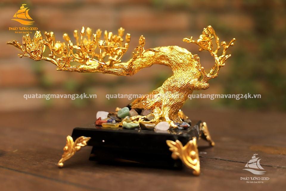 cây hoa mai bonsai mạ vàng